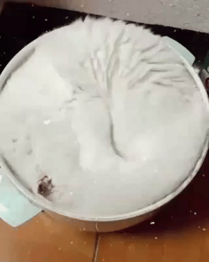 RT @TheComedyHumor: Thought it was a bowl of ice cream https://t.co/594SZ1vNVS: RT @TheComedyHumor: Thought it was a bowl of ice cream https://t.co/594SZ1vNVS