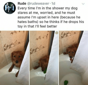 Memes, Rude, and Shower: Rude @rudeweaver-1d  Every time I'm in the shower my dog  stares at me, worried, and he must  assume l'm upset in here (because he  hates baths) so he thinks if he drops his  toy in that I'll feel better  S, Go hug your dog(s) via /r/memes https://ift.tt/2MbNbyQ