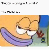 "What a way to start the season 🇦🇺👌🏽 rugby wallabies ireland banter: ""Rugby is dying in Australia""  The Wallabies:  RUGBY  MEMES  nstagram What a way to start the season 🇦🇺👌🏽 rugby wallabies ireland banter"