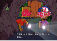 Memes, Cool, and Reds: RUGBY  MEMES  ge  DS  ARAT  ANS  -This is where I come to cry.  Cool What's worse: Blowing a 29-point lead or losing by 35 to the Sunwolves? 😒😒 rugby waratahs reds superrugby