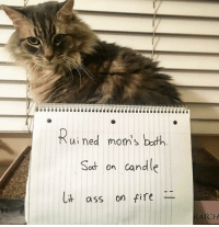 Ass, Moms, and Cat: Rui ned mom's buth  Sot on candle  ass on ie  RATCH Get a cat they said