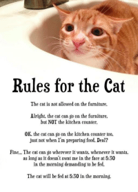 Food, Memes, and True: Rules for the Cat  The cat is not allowed on the furniture.  Alright, the cat can go on the furniture,  but NOT the kitchen counter.  0K, the cat can go on the kitchen counter too.  just not when I'm preparing food. Deal?  Fine... The cat can go wherever it wants, whenever it wants  as long as it doesn't swat me in the face at 5:30  in the morning demanding to be fed  The cat will be fed at 5:30 in the morning. Too true!