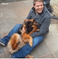 Dank, German Shepherd, and Happiness: RUMBLE This German Shepherd cries with happiness after reuniting with his human 😭🐶
