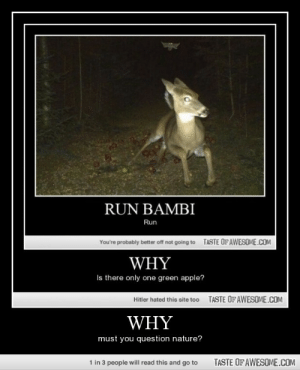 Whyhttp://omg-humor.tumblr.com: RUN BAMBI  Run  TASTE OFAWESOME.COM  You're probably better off not going to  WHY  Is there only one green apple?  TASTE OF AWESOME.COM  Hitler hated this site too  WHY  must you question nature?  TASTE OF AWESOME.COM  1 in 3 people will read this and go to Whyhttp://omg-humor.tumblr.com