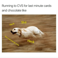 Funny, Wind, and Last Minute: Running to CVS for last minute cards  and chocolate like  eck Shit  Heck You don't wanna wind up in the doghouse