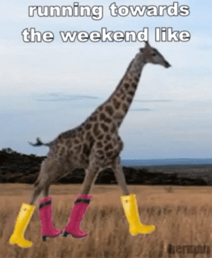 Best Funny Tgif GIFs | Find the top GIF on Gfycat: running towards  the weekend like  hentan Best Funny Tgif GIFs | Find the top GIF on Gfycat