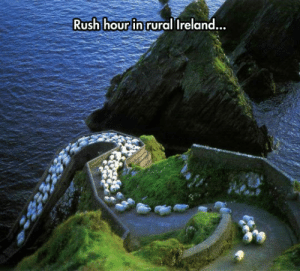 laughoutloud-club:  The Traffic Sucks: Rush hour in rural Ireland  .. laughoutloud-club:  The Traffic Sucks