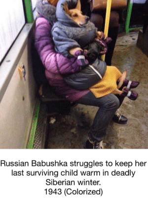 Poor Babushka by Carter_JD FOLLOW 4 MORE MEMES.: Russian Babushka struggles to keep her  last surviving child warm in deadly  Siberian winter.  1943 (Colorized) Poor Babushka by Carter_JD FOLLOW 4 MORE MEMES.