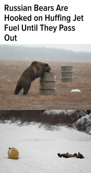 Target, Tumblr, and Addicted: Russian Bears Are  Hooked on Huffing Jet  Fuel Until They Pass  Out michaelpoe:  zoreta:  This is an actual, legit problem in Russia.    Kronotsky Nature Reserve, like most nature reserves, is pretty remote and relies on gas generators for electricity, and keeps jet fuel around in case a rescue copter is needed.    Thing is, these gas drums are just out in the open. And then the bears found them, and discovered that huffing the fumes got them high to the point of passing out. So now there are all these bears addicted to huffing jet fuel, and they're teaching it to each other.  One one hand, nobody wants bears addicted to huffing highly flammable, toxic crap. It's not healthy or safe for the bears to just pass out.  On the other, remove the jet fuel… and you have a population of bears going through drug withdrawal, and a bunch of nature reserve workers stuck with them in the middle of nowhere.  Additionally, bears have started seeking alternate sources, like trailing behind a helicopter in hopes of fuel leaks, so taking away their source might be… ill advised.     This one of the most Russian things I've ever read.