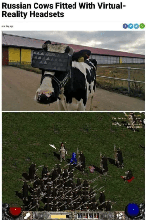 Turns out there is a cow level.: Russian Cows Fitted With Virtual-  Reality Headsets  one day ago  GALE SADFIT  THE SECRET Ce LevEL  DI LTY: NicmAR  EXPANSION Turns out there is a cow level.