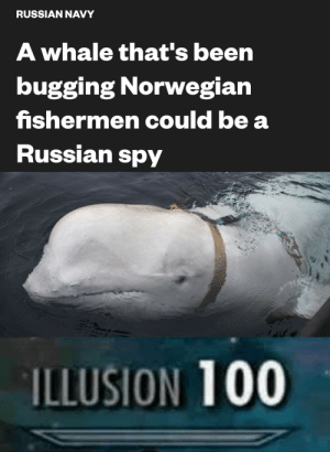 Bad, Navy, and Norwegian: RUSSIAN NAVY  A whale that's been  bugging Norwegian  fishermen could be a  Russian spy  ILLUSION 100 Bad beluga