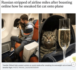 meow🥂irl: Russian stripped of airline miles after boasting  online how he sneaked fat cat onto plane  Traveller Mikhail Galin posted a photo on social media after sneaking his overweight cat on board  Aeroflot flight. PHOTO: MIKHAIL_GALIN/INSTAGRAM meow🥂irl