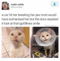rustin cohle  @flesrullikko  a car hit her breaking her jaw most would  have euthanised her but the docs repaired  it look at that igot9lives smile  @Drsmashlove That is such an adorable, Dopey smile. I want to steal that kitten-pickles