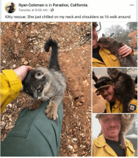 meirl: Ryan Coleman is in Paradise, California  yTuesday at 8:55 AM.S  Kitty rescue. She just chilled on my neck and shoulders as l'd walk around meirl