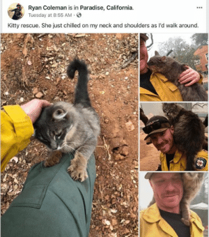 meirl by Nordic_Wolf_1488 MORE MEMES: Ryan Coleman is in Paradise, California  yTuesday at 8:55 AM.S  Kitty rescue. She just chilled on my neck and shoulders as l'd walk around meirl by Nordic_Wolf_1488 MORE MEMES