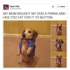 Tumblr, Blog, and Http: Ryan Holt  @LightningHoltt  #  Follow  MY MOM BOUGHT MY DOG A PARKA AND  HES TOO FAT FOR IT TO BUTTON spankmehardbarry: voulair:  this is so negative its just that the parka is too small :/  stop fatshaming my baby