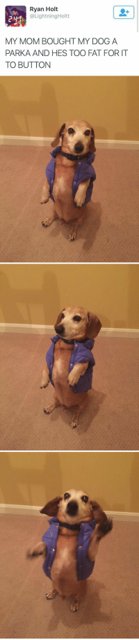 "Animals, Target, and Tumblr: Ryan Holt  @LightningHoltt  MY MOM BOUGHT MY DOG A  PARKA AND HES TOO FAT FOR IT  TO BUTTON <p><a href=""http://babyanimalgifs.tumblr.com/post/147400369826/baby-animals-blog"" class=""tumblr_blog"" target=""_blank"">babyanimalgifs</a>:</p>  <blockquote><p><a href=""http://babyanimalgifs.tumblr.com/"" target=""_blank"">baby <b>animals</b> blog</a></p></blockquote>"