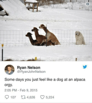 Meirl by english_gritts MORE MEMES: Ryan Nelson  @RyanJohnNelson  Some days you just feel like a dog at an alpaca  orgy  2:05 PM - Feb 9, 2015  107 4,626 5,224 Meirl by english_gritts MORE MEMES