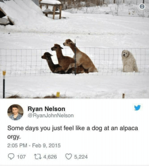 Orgy, Alpaca, and Doggo: Ryan Nelson  @RyanJohnNelson  Some days you just feel like a dog at an alpaca  orgy  2:05 PM - Feb 9, 2015  107 4,626 5,224 I feel for the doggo