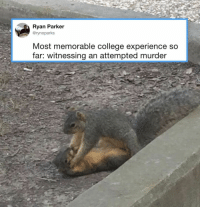 """""""I told you to bring home some nuts and you ate all of them instead?!""""⠀ 📸 rynoparks 