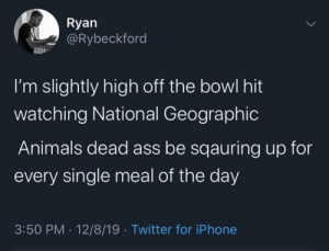 Free them fr: Ryan  @Rybeckford  I'm slightly high off the bowl hit  watching National Geographic  Animals dead ass be sqauring up for  every single meal of the day  3:50 PM · 12/8/19 · Twitter for iPhone Free them fr