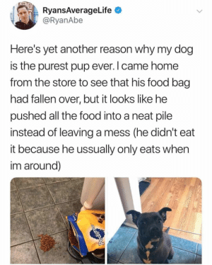 Dog Memes Of The Day 30 Pics – Ep53 #animalmemes #dogmemes #memes #dogs - Lovely Animals World: RyansAverageLife  @RyanAbe  Here's yet another reason why my dog  is the purest pup ever. I came home  from the store to see that his food bag  had fallen over, but it looks like he  pushed all the food into a neat pile  instead of leaving a mess (he didn't  it because he ussually only eats when  im around)  Pedigre Dog Memes Of The Day 30 Pics – Ep53 #animalmemes #dogmemes #memes #dogs - Lovely Animals World