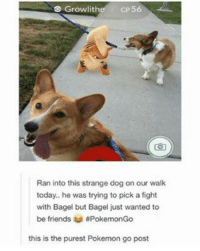 Anime, Cute, and Dank: s CP56  Growlith  Ran into this strange dog on our walk  today.. he was trying to pick a fight  with Bagel but Bagel just wanted to  be friends aPokemonGo  this is the purest Pokemon go post Sooo cute! 😍 - Sent in by FunnyPokemonAmbassador @Imthebatmann & @711broncos ! Thanks! ___________ Want to become an official Funny Pokemon Ambassador too? Then DM us your best and funniest pokemon memes to feature 😀 ___________ pokemon nintendo anime art blizzard deviantart pokemonart videogames comics pikachu meme draw dankmemes pokemoncards followme gamer gaming pokemontcg dank pokemongo fun pokemonmemes puppy likeme lol disney pikachu pokeball