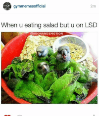 Lsd, When U, and  Salad: S gymmemesofficial  2m  When u eating salad but u on LSD  IRONANDEMOTION This isn't what I ordered.