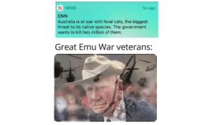 Cats, cnn.com, and News: S NEWS  1m ago  CNN  Australia is at war with feral cats, the biggest  threat to its native species. The government  wants to kill two million of them.  Great Emu War veterans: Ah shit, here we go again.