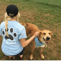 Dogs, Memes, and Blue: S S Save the dogs in our NEW light blue anchor Tee 🐶⚓️ order now at PawzShop.com featuring @mandypants___
