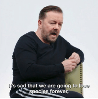 "Memes, Forever, and Sad: 's sad that we are going to  ecies forever, ""It's not conservation, it's psychopaths who like killing things"" Ricky Gervais has his say on poaching. extinct"