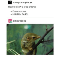 Drawings, Mouse, and Trendy: S snowy sauropteryx  How to draw a tree shrew  Draw mouse.  HUMAN EARS.  dimetrodone I'm getting a cold