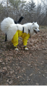 The debate is over. Dogs wear pants like this - spotted while out on a walk: s The debate is over. Dogs wear pants like this - spotted while out on a walk