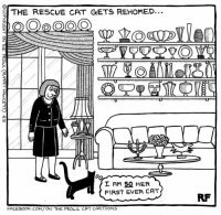 Memes, Cartoon, and Cartoons: S THE RESCUE CAT GETS REHOMED.  a (OOO  SEE  I AM SO HER  FIRST EVER CAT  FACEBOOK.COM/ON THE PROWL CAT CARTOONS The New Arrival... #Cats #Ontheprowl #Rupertfawcett
