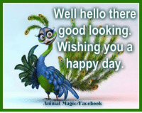 Facebook, Hello, and Memes: s Well hello there  good looking  O Wishing you a  happy day  Animal Magic/Facebook