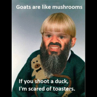 LMAOO dont do shrooms kids 😂😂😂😂: Goats are like mushrooms  If you shoot a duck  I'm scared of toasters. LMAOO dont do shrooms kids 😂😂😂😂