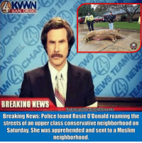 America, Memes, and Muslim: SA  BREAKING NEWS  UncleSamsMisquidedChildren.com  Breaking News: Police found Rosie O'Donald roaming the  streets of an upper class conservative neighborhood on  Saturday. She was apprehended and sent to a Muslim  neighborhood. UncleSamsMisguidedChildren AMERICA hillaryforprison Mattis2016 USMC SemperFi USMCLIFE IGTactical MARINES Veteran USA Grunts INFIDEL OUTLAW USMCVETERAN Tactical SemperFidelis Liberty Freedom NRA Revolution DontTreadOnMe MolonLabe 2A USMarines 3Percenter 03Life 0311 SecondAmendment Extortion17