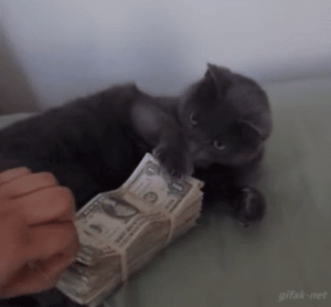 sad-boyofficial:  miss-nerdgasmz:  This is the savings cat. Reblog so u can save up and pay ur bills like the responsible egg they know u can be   I like savings cat better than money cat tbh: sad-boyofficial:  miss-nerdgasmz:  This is the savings cat. Reblog so u can save up and pay ur bills like the responsible egg they know u can be   I like savings cat better than money cat tbh