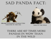sad panda: SAD PANDA FACT:  988,488 PANDAREN CHARACTERS  CREATED IN THE USA  1,600 IN THE WILD  THERE ARE 617 TIMES MORE  PANDAS IN WOW THAN  IN THE WILD