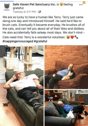 Cats, Wholesome, and Mind: Safe Haven Pet Sanctuary Inc. is feeling  grateful.  Tuesday at 3:11 PM . S  We are so lucky to have a human like Terry. Terry just came  along one day and introduced himself. He said he'd like to  brush cats. Eventually it became everyday. He brushes all of  the cats, and can tell you about all of their likes and dislikes.  He also accidentally falls asleep most days. We don't mind-  Cats need this! Terry is a wonderful volunteer.  #nappingencouraged #grateful  18 Wholesome Terry