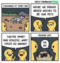 Memes, Pets, and Wolves: SAFELY ENDANGERED WEBTOON  THOUSANDS OF YEARS AG0  MAYBE WE SHOULD  BREED WOLVES TO  BE OUR PETS  MODERN DAY  THEY'RE SMART  AND ATHLETIC, WHAT  COULD GO WRONG? 🐶🐺 safelyendangered comic webcomic webtoon