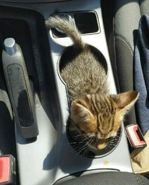 Safety Bulletin Ford Escape 2013 - 2016. The cupholder capacity is one cubic kitten. Exceeding this capacity could result in operator error and/or catastrophic failure. The Ford Motor Company shall assume no liability for damages incurred from improper usage of the cupholder.: Safety Bulletin Ford Escape 2013 - 2016. The cupholder capacity is one cubic kitten. Exceeding this capacity could result in operator error and/or catastrophic failure. The Ford Motor Company shall assume no liability for damages incurred from improper usage of the cupholder.