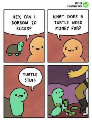 Turtle Stuff by jaswantrathod MORE MEMES: SAFEUT  ENDANGERED  HEY, CANI  BORROW 20  BUCKS?  WHAT DOES A  TURTLE NEED  MONEY FOR?  TURTLE  STUFF Turtle Stuff by jaswantrathod MORE MEMES