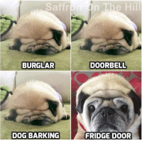 Memes, Mood, and Smile: Saffr  n The Hill  BURGLAR  DOORBELL  DOG BARKING  FRIDGE DOOR I hope this makes you smile and puts you in a great mood to start the day off with 😍 N xx