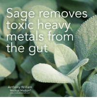 <3: Sage removes  toxic heavy  metals from  the gut  Anthony William  Medical Medium  www.medicalmedium.com <3