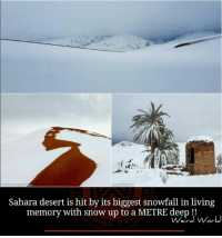 Memes, 🤖, and Desert: Sahara desert is hit by its biggest snowfall in living  memory with snow up to a METRE deep