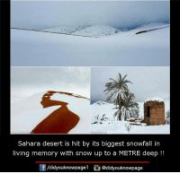 Memes, 🤖, and Desert: Sahara desert is hit by its biggest snowfall in  living memory with snow up to a METRE deep  /didyouknowpagel Cu  @didyouknowpage
