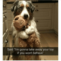 "Follow @hilarious.ted for more cute animal memes!: Said ""I'm gonna take away your toy  if you won't behave Follow @hilarious.ted for more cute animal memes!"