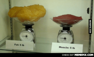 This explains why you gain weight when you begin working outomg-humor.tumblr.com: SAIF  Fat: 5 Ib  Muscle: 5 lb  CHECK OUT MEMEPIX.COM  MEMEPIX.COM This explains why you gain weight when you begin working outomg-humor.tumblr.com