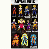 Even though SSJ4 is non-canon, it'll always be my favorite. Too bad it wasn't included. {Creds @dbz_exclusives }: SAIYAN LEVELS  FB.com/DBZexclusives  BASE FORM  SUPER ASCENDED/SECOND GRADE  ULTRA /THIRD GRADE  SAIYAN  SUPER SAIYAN  SUPER SAIYAN  IDBZexclusives  FB.com/DB exclusives  N FBcom/DBZexclusives  FB.com/DB exclusives  Bcom/DBZ  LEGENDARY  FULL POWEREDIATH GRADE  SUPER SAIYAN  SUPERSAIYAN 2 SUPER SAIYAN 3  SUPER SAIYAN  SIV  SUPERSAIYAN GOD  SUPER SAIYAN RAGE  SUPER SAIYAN BLUE  SUPERSAIYANGOD SUPER SAIYAN Even though SSJ4 is non-canon, it'll always be my favorite. Too bad it wasn't included. {Creds @dbz_exclusives }
